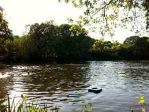 Swimming with the ducks at Kenwood Ladies' Pond